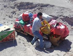 SAG destruyó casi mil kilos de frutas que fueron ingresadas ilegalmente a la Región